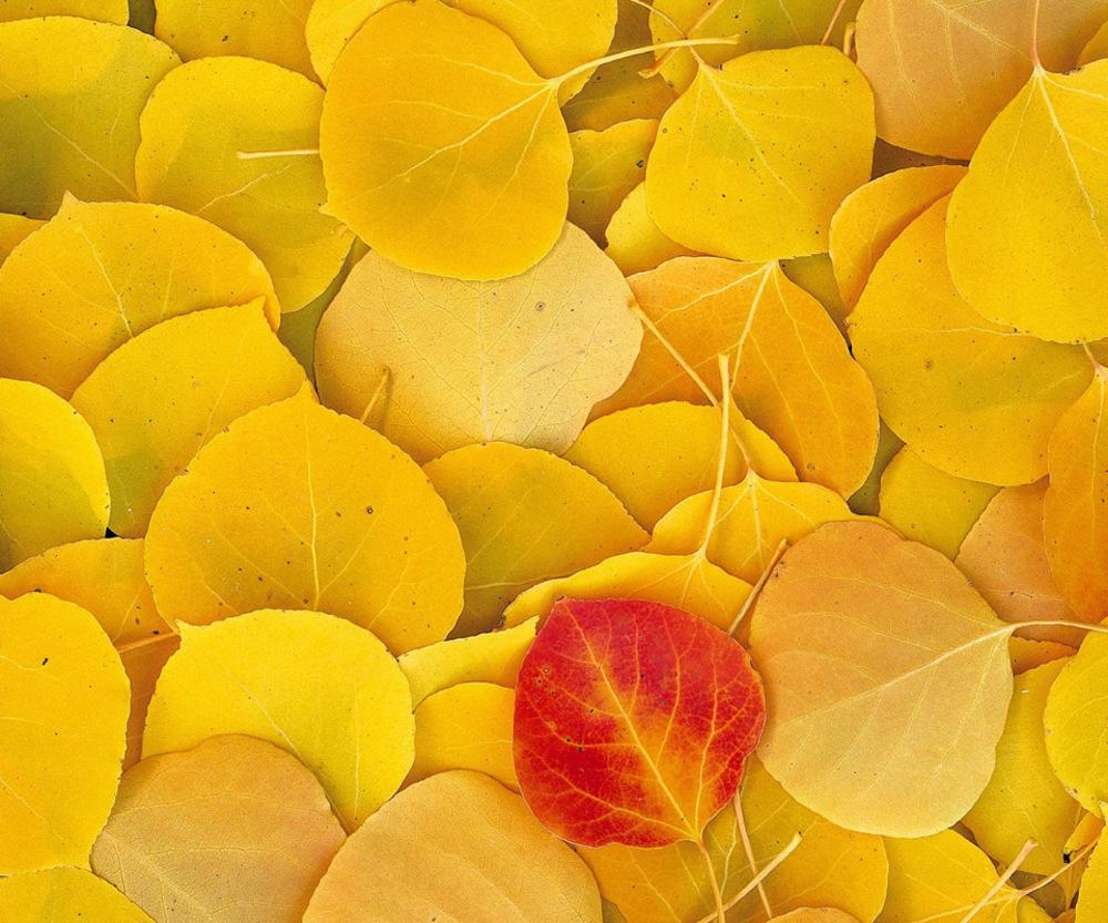 красно-желтые листья бесплатно