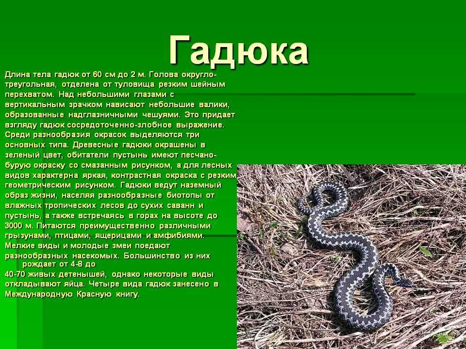 Картинки и описание змей