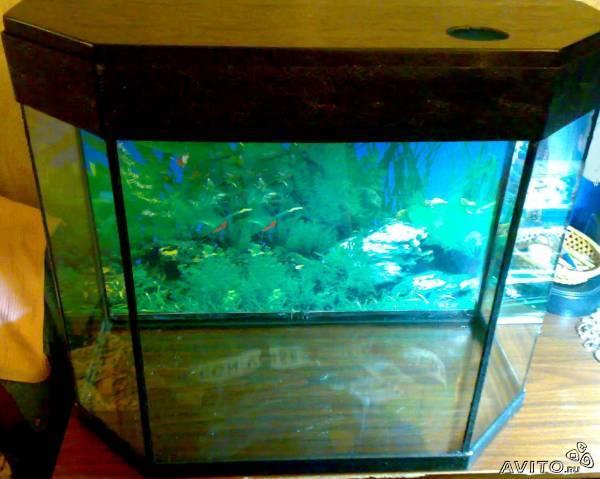 Крышка для панорамного аквариума своими руками видео