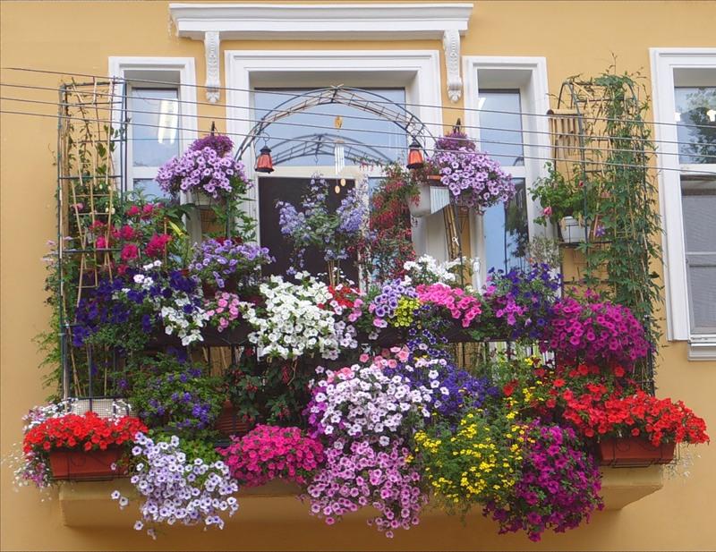Красивые балконы с цветами фото.