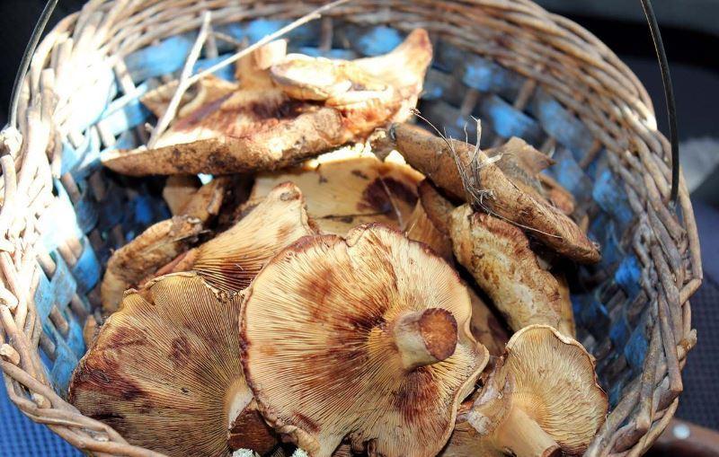 более картинка коровника грибами дросте это рекурсивное