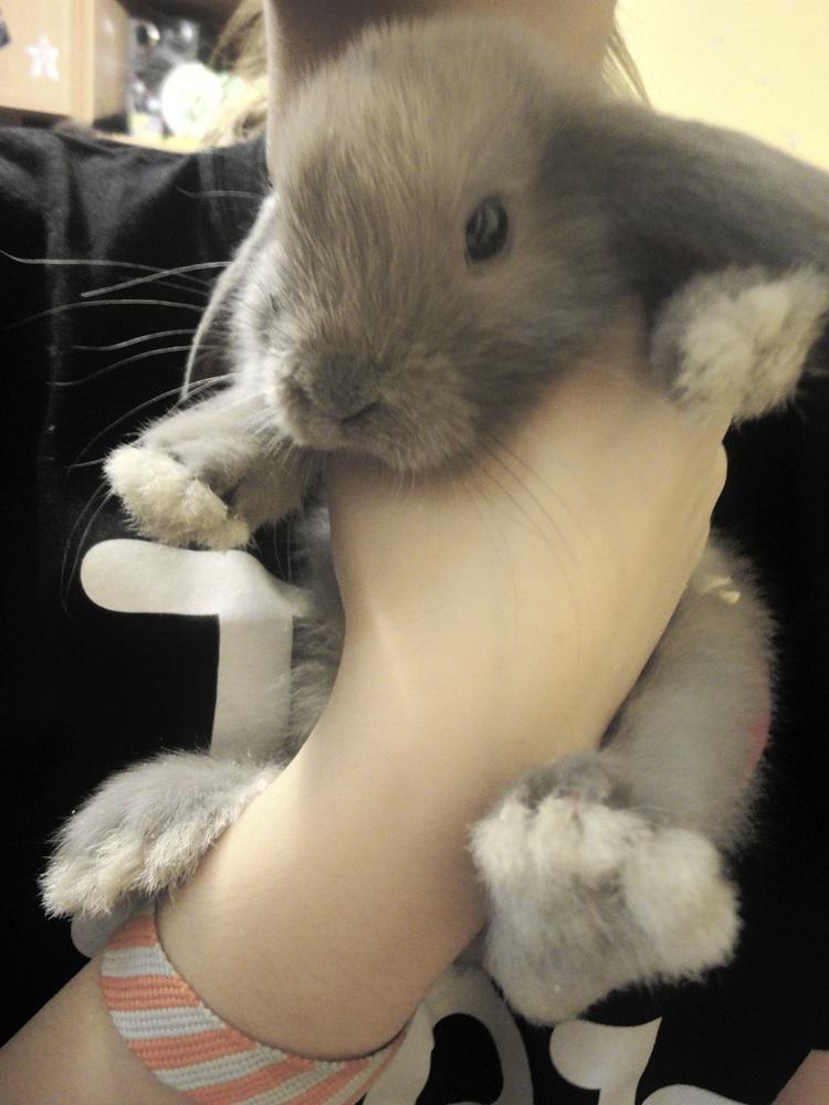 Секс декоративных кроликов