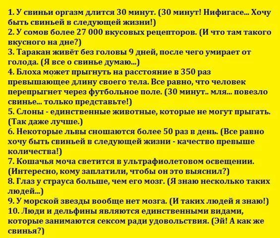 https://i0.u-mama.ru/b4e/be3/e08/b338e19198db6547ac184b19e6eac53f.jpg