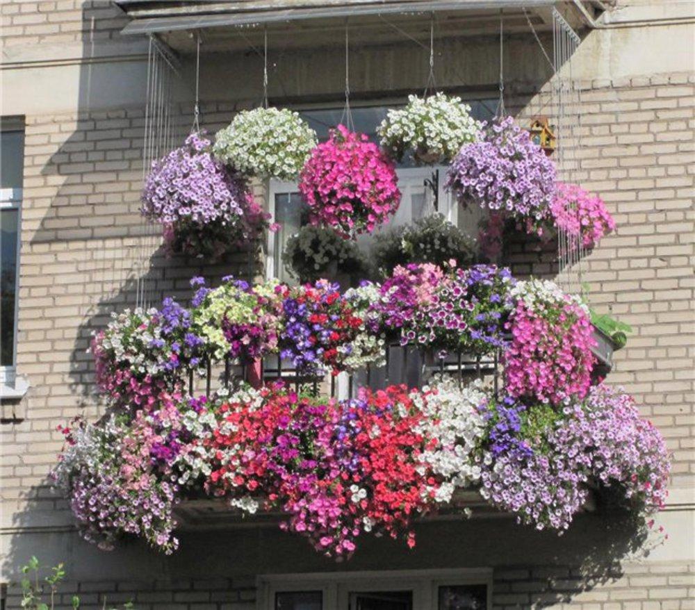 Создание балконного цветника: название цветов для балконных .