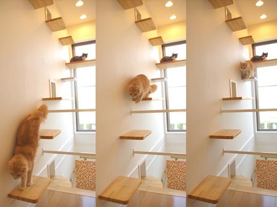 cat care plus homebase