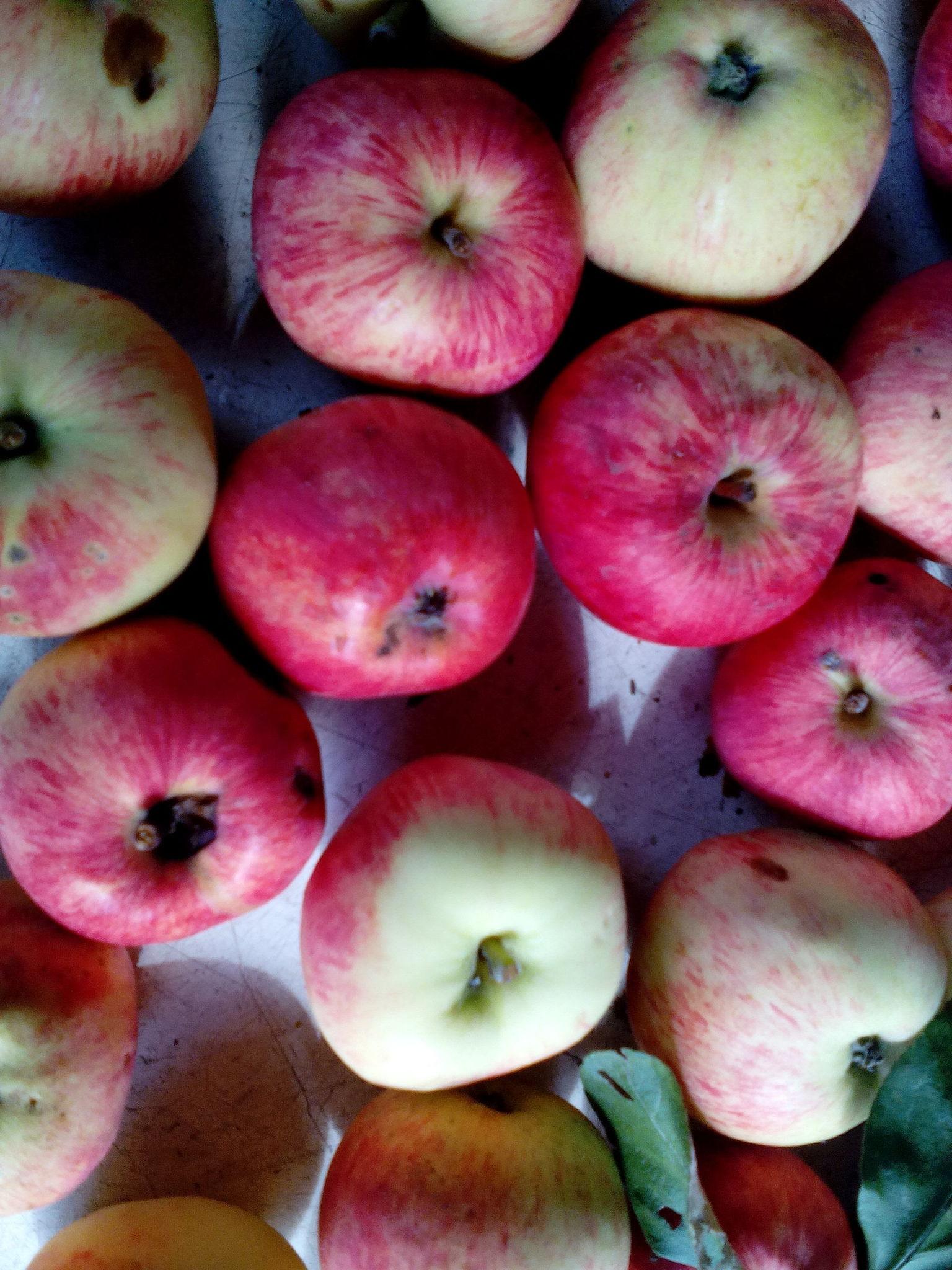 это был сорта ранних сладких яблонь фото может вам подать
